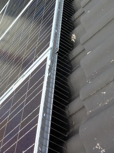 TAS 1er Solarspitzen 50 cm lang, Taubenspikes 2.0 mm stark aus Edelstahl Rostfrei